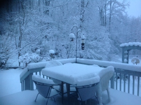 our deck this morning, 7:30 am