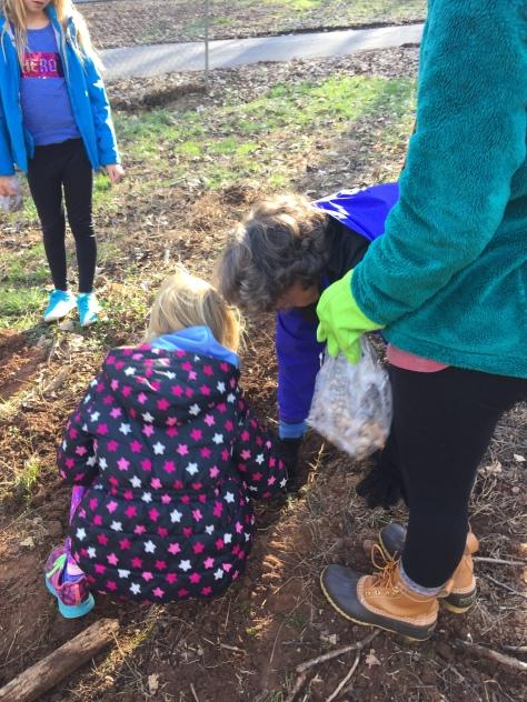 planting bulkbs